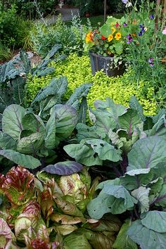 Perennial Fruits, Veggies and Herbs. Plant once, eat for years! (Pretty Mix Chicks)