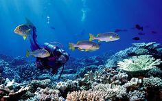 O fundo do mar é um lugar que inspira sonhos e fascina muita gente. Lindas imagens azuladas e cheias de peixes coloridos estão espalhadas por cartões postais, fundos de tela dos computadores e vários outros lugares. Elas despertam nossa curiosidade para um mundo diferente do nosso e é quase impossível não ficar curioso para saber …