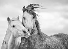 Best Friends I Print by Tim Booth