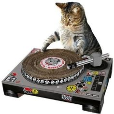 SuckUK Cat DJ Scratching Deck | Cat | Toys | PetFlow