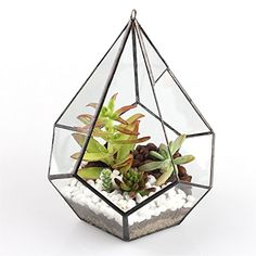 Modern Artistic Tears Shape Diamond 3MM Thick Clear Glass Geometric Polyhedron Terrarium Hanging Air Planter- 5-face triangle with 6-face pentagons-  4.5x4.5x5.3 inches - 5.5 inches with loop-  *** Tried it! Love it! Click the image. : Gardening Tools