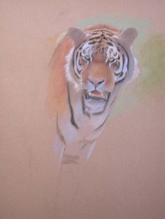 how to paint a tiger, pastel art instruction, wildlife lesson