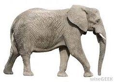 Résultats de recherche d'images pour «elephant»