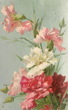 Carnations in white, light pink and dark pink by Catherine Klein ~ 1903.