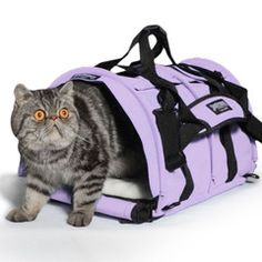 Many professional animal trainers and exhibitors who travel with cats and dogs extensively prefer SturdiBag™ because it is simply the best in-cabin, light weight, flex-height pet carrier available. Whether it is used on a plane, in the car, or for carrying on foot, your pet will be comfortable and safe in a SturdiBag™ cat or small dog carrier.