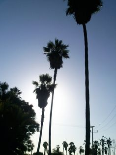 One Day In The Sun Of Baja California..