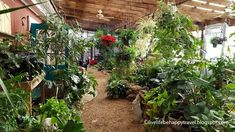 Hocott's Garden Center - Little Rock, Arkansas - Indoor tropical garden - AR - Things to do Arkansas - plant - indoor plants - plants for sale