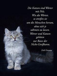 Katzen sind wie Wörter...