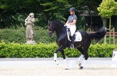 Top Level Dressage Prospect Types Of Horses, Dressage Horses, Horses For Sale, Really Cool Stuff, Equestrian, Have Fun, To Go, Sport, Videos