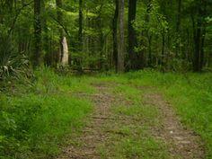 Savannah River Swamp Trail   SAVANNAH RED
