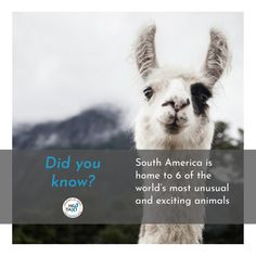 And home to one of the cutest, as well, we might add. Volunteer Work, Volunteer Abroad, Work Travel, Stay The Night, Find A Job, Learning Spanish, Getting To Know, Taxi, South America
