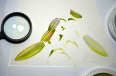 Botanical and Nature Art by Krzysztof Kowalski: The Big Brother lily - first washes