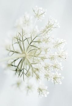 Little white flowers branches