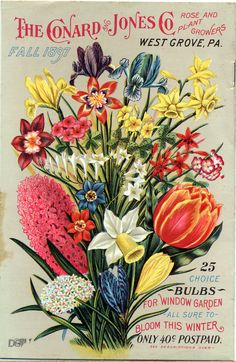 Vintage Seed Catalog dated 1897.  All our favorites are represented on this wonderfully rendered illustration!