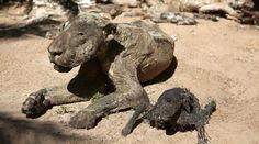 A mummified lion has been found at an empty zoo in gaza aliens latest: tests In China, Zoo Animals, Funny Animals, Kids Zoo, Animal Crafts For Kids, Stop Animal Cruelty, Animal Activities, Animal Welfare, Animal Rights