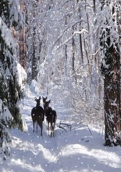 Beautiful Snowfall | Winter is so beautiful Winter Szenen, Winter Love, Winter Magic, Winter Christmas, Winter Walk, Prim Christmas, Winter White, Foto Picture, I Love Snow