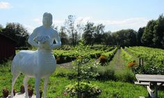 Vignoble Le Centaure - Route des vins Estrie - Québec Canton, Garden Sculpture, Sunday, Places, Outdoor Decor, Vineyard, House Of Cards, Centaur, Tourism