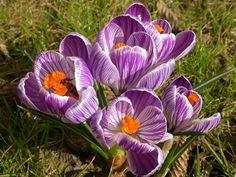 Il Giardino delle stagioni - Kepos giardino paesaggio ambiente Kepos giardino paesaggio ambiente