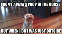 Zoey this is you!