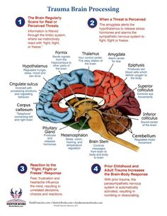 I chose this because of the in-depth way it presents the information on how the brain processes before, during, and after trauma. This is a great tool to pass onto clients or discuss with them. Neuroscience and Trauma Theory Brain Facts, Facts About The Brain, Trauma Therapy, Brain Science, Anatomy And Physiology, Brain Health, Mental Health, Educational Psychology, Health Psychology