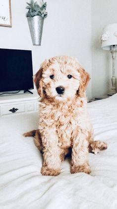 Dog And Puppies Memes .Dog And Puppies Memes Super Cute Puppies, Cute Baby Dogs, Cute Dogs And Puppies, Doggies, Cute Pups, Fluffy Puppies, Lil Baby, Baby Puppies, Bulldog Puppies