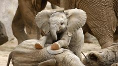 Adorable elephants to help you celebrate Elephant Appreciation Day