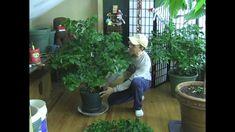 Tips for Super strong HUGE pepper plants Garden Soil, Garden Seeds, Gardening Tips, Urban Gardening, Indoor Gardening, Vegetable Gardening, Growing Bell Peppers, Pepper Plants, Garden Structures