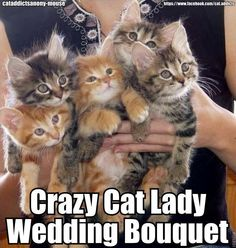 Crazy Cat Lady Wedding Bouquet