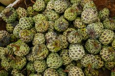sugar-apple Exotic Fruit, Indonesian Food, Artichoke, Sugar, Apple, Vegetables, Health, Apple Fruit, Artichokes