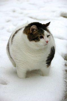 Fat cat http://pursuitofcute.com/?fp_type=news