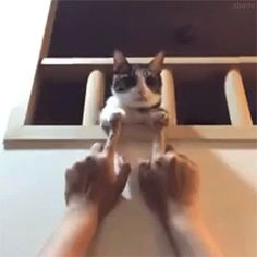 funny cats gif