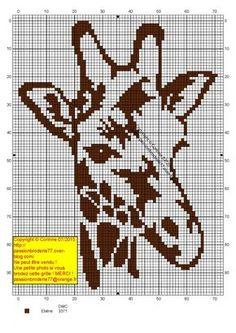 Tete girafe