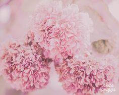 Botanical Print in Pastel Pink Lavender Blush by hellotwiggs, $30.00