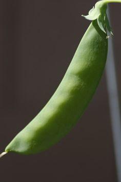 Arizona Garden Planting Calendar Gardening Tips Tricks Tools & Displays Pinterest