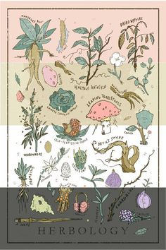 Step into Hogwarts Herbology Class with this Harry Potter themed Herbology print. This print has most of the things you will encounter in Herbology class with Professor Sprout. From the popular Mandrake Root, to the leaping toadstool. This print looks bea Harry Potter Film, Harry Potter Poster, Deco Harry Potter, Theme Harry Potter, Harry Potter World, Harry Potter Hogwarts, Anniversaire Harry Potter, Hand Illustration, Art Inspo