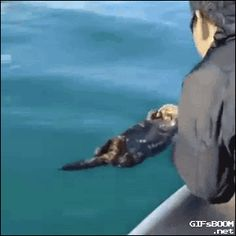 A sleeping otter gets a rude awaking in Alaska