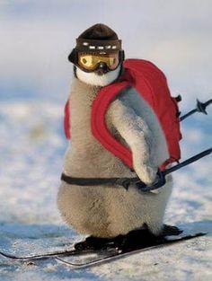 Monty the Penguin says ski ski ski! #macwonderland