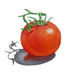 T Art Alphabet for Kids Room by Irina Sztukowski Fruit Illustration, Food Illustrations, Watercolor Food, Watercolor Paintings, Easy Paintings, Original Paintings, Kids Room Paint, Alphabet For Kids, Still Life Art