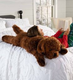 "A welcome gift for any dog lover, our Labradoodle body pillow offers an oversized hug whenever its needed. Curl up with this super-soft Labradoodle dog and relax in snuggly comfort. Our fun-loving plush dog body pillow is crafted with a high-pile, textured, wavy coat in a rich chocolate-red color. Beaded eyes and a perky nose give our lovable Labradoodle an expressive face and lots of personality. Our large dog pillow is great for relaxing and perfect for ""kids"" of any age."