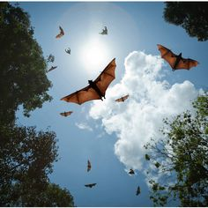 Bat Attack! A Cautionary Tale via @50over55 Getting Rid Of Bats, Bat Species, University Of Rochester, Medical News, Law Of Attraction, Mammals, Health And Wellness, Fighter Jets, Meant To Be