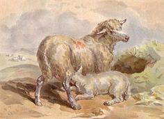SHEEP with Lamb Nursing, Quality Antique 1880s Print