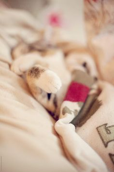Like A Cat, Cat Sleeping, Domestic Cat, Close Up, Snug, Blanket, Cats, Gatos, Blankets