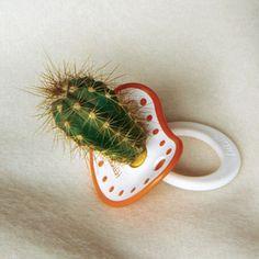 chupete de cactus by Alejandro Bernales, via Flickr