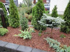 Paritalon etupiha | Toivepiha Oy Outdoor Decor, Plants, Garden, Outdoor Living, Evergreen, Secret Garden, Conifers, Landscape, Garden Landscaping