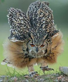 Bird Pictures, Cool Pictures, Birds Pics, Animal Action, Beautiful Creatures, Amazing Photography, Wildlife, Instagram, Wild Nature