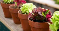 Tips for indoor vegetable gardening