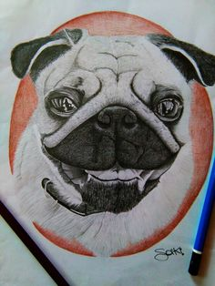 Saki doog drawing tattoo carlino love pet good