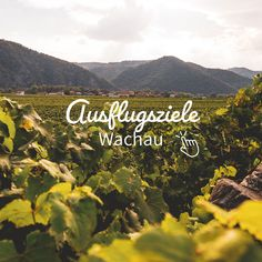 Austria, Sailing, Highlights, Movies, Movie Posters, Wine Vineyards, Day Trips, Ruins, Graz
