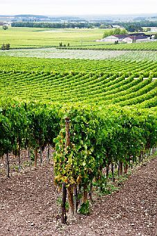 hennessy: cognac, france travel-photography