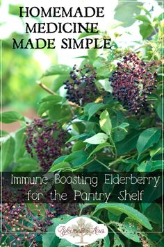 Immune-boosting elderberry syrup (for the pantry) Making homemade medicine doesnt have to be difficult! An easy place to start is with an immune boosting elderberry syrup to add to your pantry shelf. - Experience Of Pantrys Healing Herbs, Medicinal Plants, Natural Healing, Natural Home Remedies, Herbal Remedies, Health Remedies, Natural Medicine, Herbal Medicine, Cough Remedies For Adults